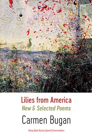 Carmen Bugan: Lilies from America